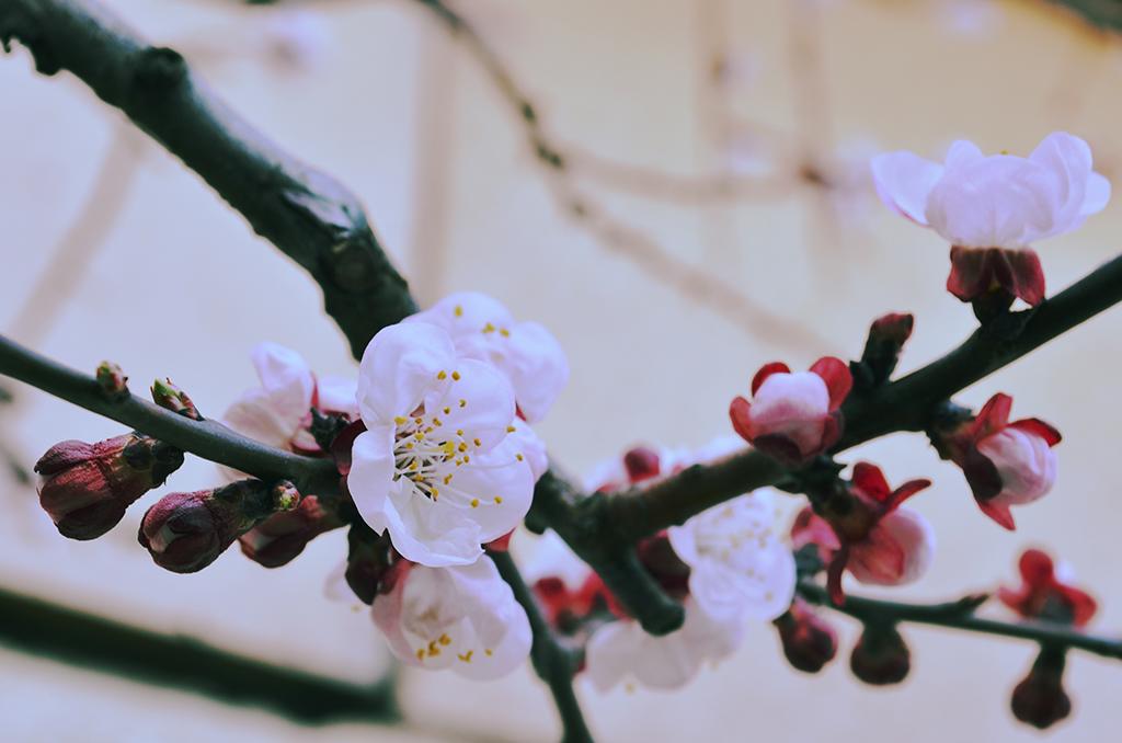 explozia primaverii burst of spring