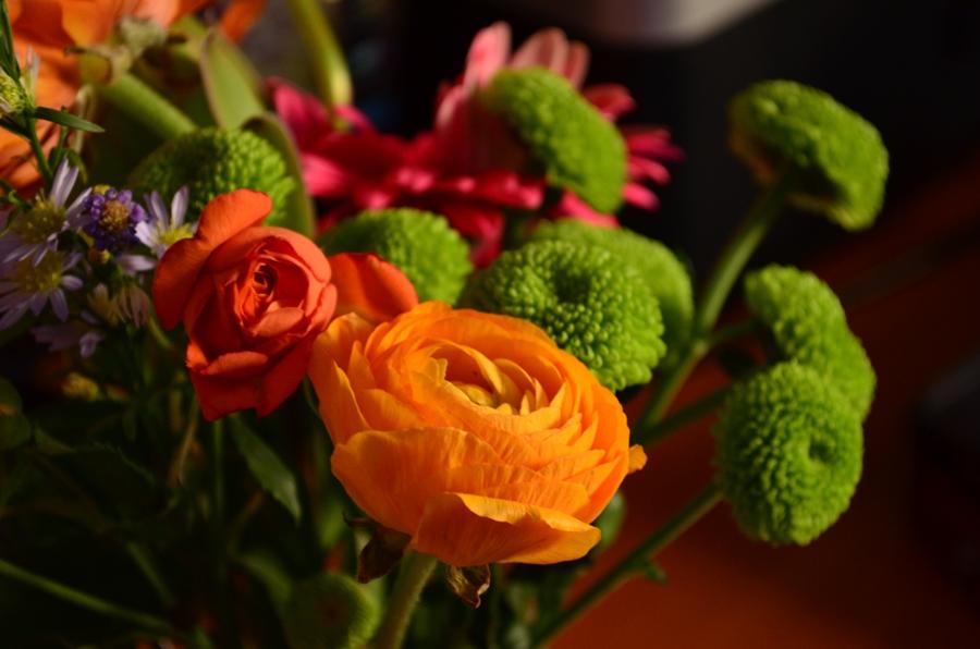 ranunculus portocalii