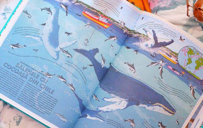 cartepedia carti aventuri la conacul penhallow statuia din bataia lunii holly webb enciclopedia enciclopediilor atlasul aventurilor animale comori ale naturii